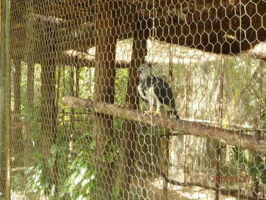 The Belize Zoo 사진