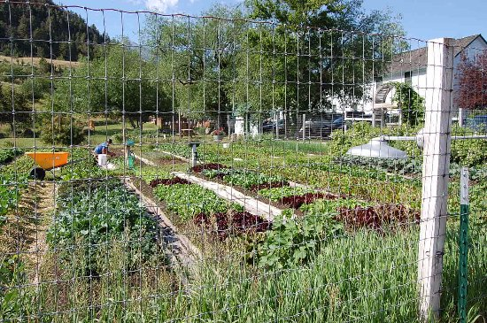Pray, MT: Vegetable Garden resort uses to grow vegetables for meals.