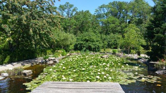 jardin aux plantes parfumes la bouichre bassin dornement avec nnuphars et carpes ko