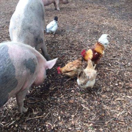 Melrose, FL: Animals Getting Along