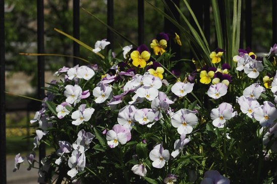Fern Cottage Restaurant: Beautiful flowers outside