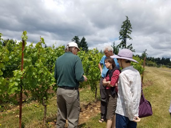 A Nose For Wine Tours : Fred explaining Pinot grapes to our group.