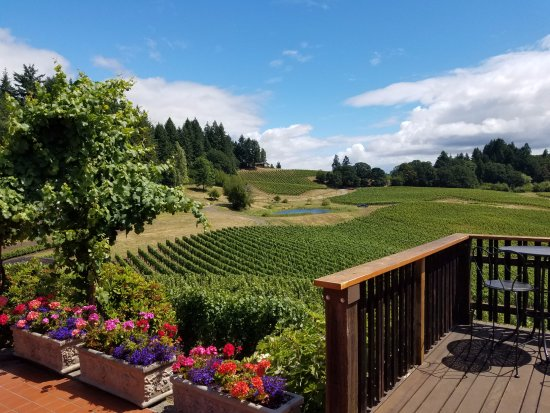 A Nose For Wine Tours : View from terrace at Elk Grove.
