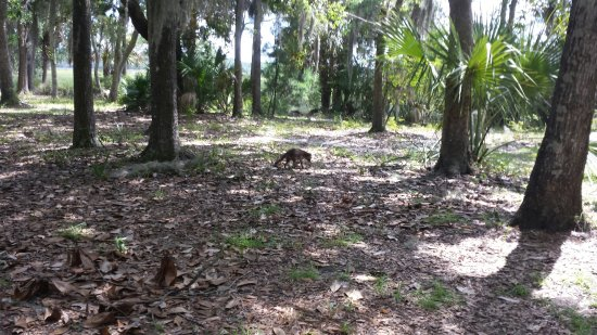 Fort McAllister State Historic Park Campground: 20160702_150923_large.jpg
