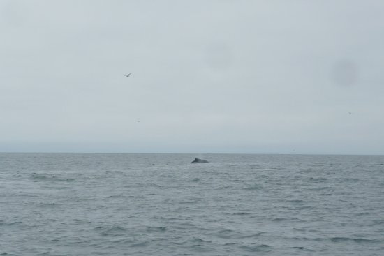 Avila Beach Boat Charters: Captain...there be whales!
