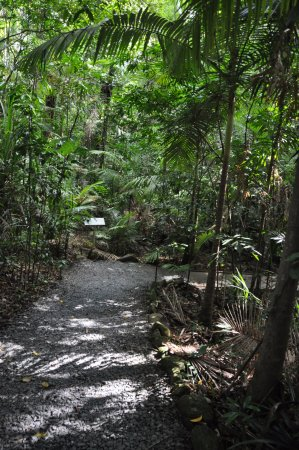 Daintree Discovery Centre: Lovely walks