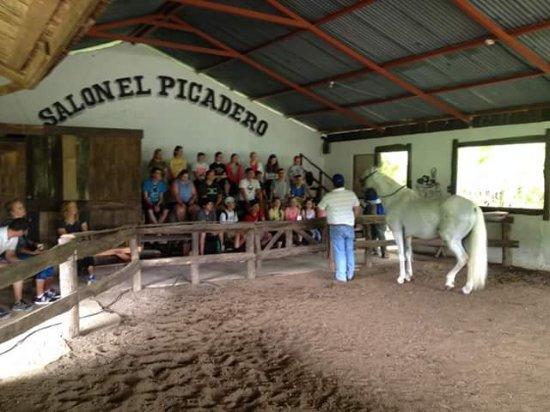 Nuevo Arenal, Costa Rica: Relicario es uno de los últimos caballos que han sido rehabilitados y hasta entrenados para tope