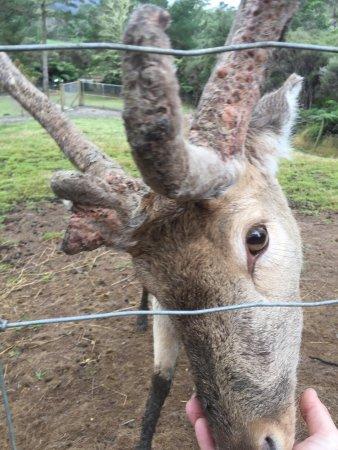 Whitianga, Nueva Zelanda: Whiti Farm Park