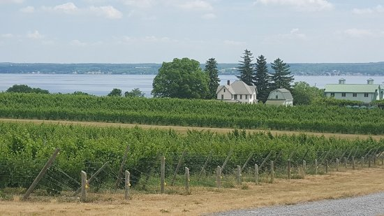Penn Yan, NY: View from July afternoon tour at Fox Run