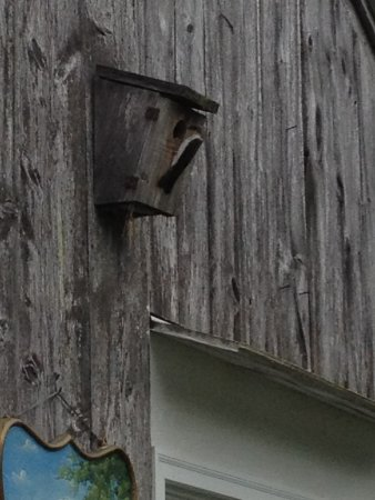 Whately, MA: Baby birds in birdhouse being fed