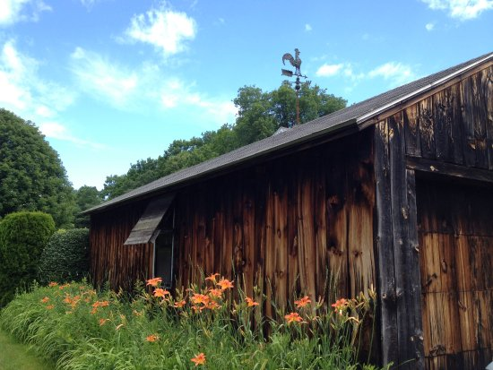 Whately, MA: Daylily patch alongside the garage