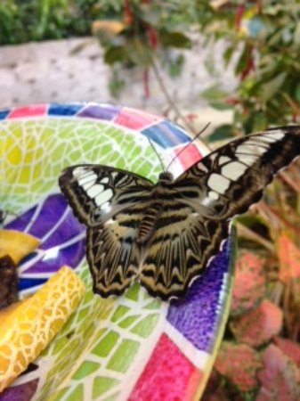 Branson, MO: The Butterfly Palace