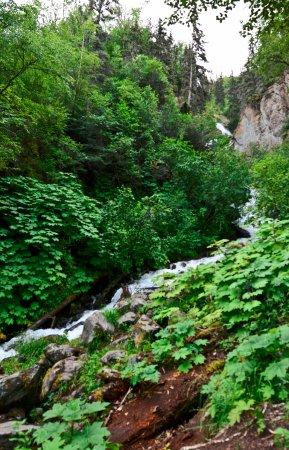 Pioneer Falls - Palmer Alaska