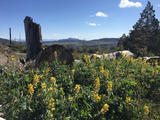 Cuyamaca Rancho State Park: photo3.jpg