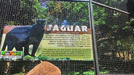 P_20160707_123907_HDR_large jpg - Picture of Jawa Timur Park