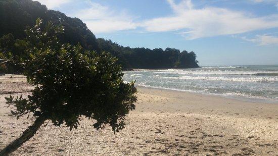 Ohope, Nieuw-Zeeland: 20160327_144222_large.jpg