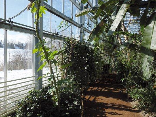 Garten Im Winter garten im winter picture of tropenhaus wolhusen wolhusen