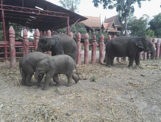 Elephantstay - Picture of Elephantstay, Ayutthaya ...