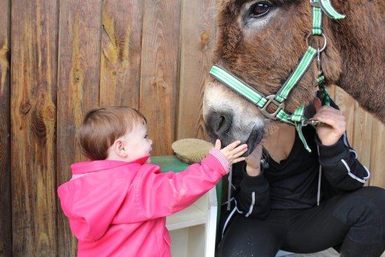 Neac, Frankrike: Premières caresses sur le museau d'un âne, EXITATION, PLAISIR, EMOTION!