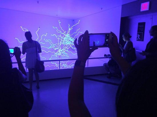 ราชพิพิธภัณฑ์ออนตาริโอ