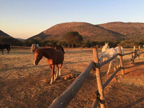 Pongola, Afrique du Sud : IMG-20160707-WA0023_large.jpg
