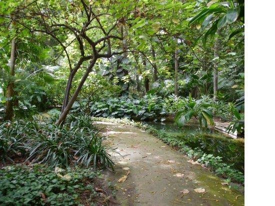 Jardin botanico historico la concepcion for Jardin botanico la concepcion