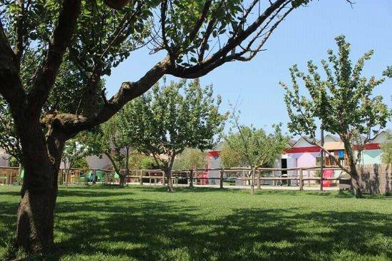 Kavaje, Albania: garden4