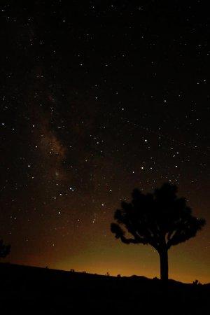 Твентинайн-Палмз, Калифорния: 国立公園内から観た夜空