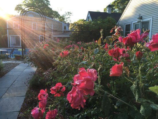 West Harwich, MA: Breakfast in the Rose Garden