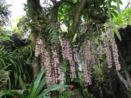 Ta Phin Stone Garden Ecological