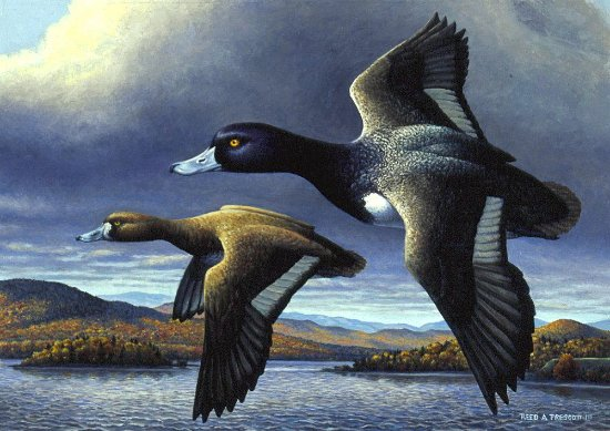 Bristol, VT: My 1996 winning Vermont Waterfowl Stamp entry