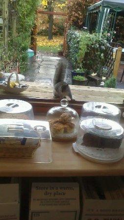 Mimosa Tea Garden: photo0.jpg