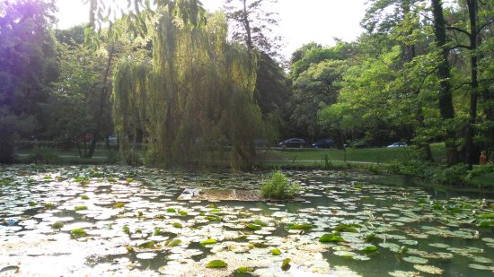 bellissimo e pieno di tartarughe - foto di parco degli alberi