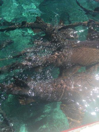 Caye Caulker, Belize: Shark / Ray Alley