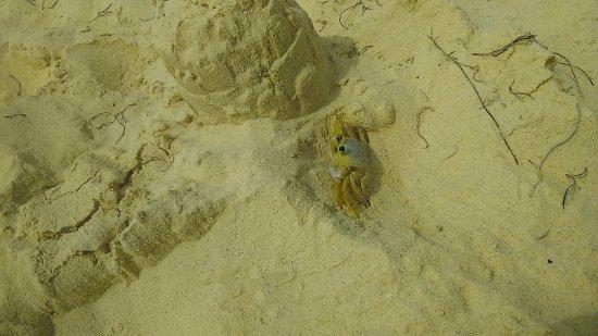 Decameron San Luis: Cangrejo en la Playa