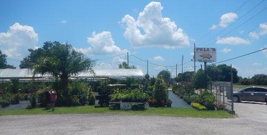 Pell S Citrus Nursery Gardent Center In