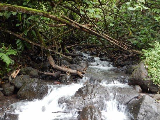 Afareaitu, Γαλλική Πολυνησία: One of the easy slippery streams to cross
