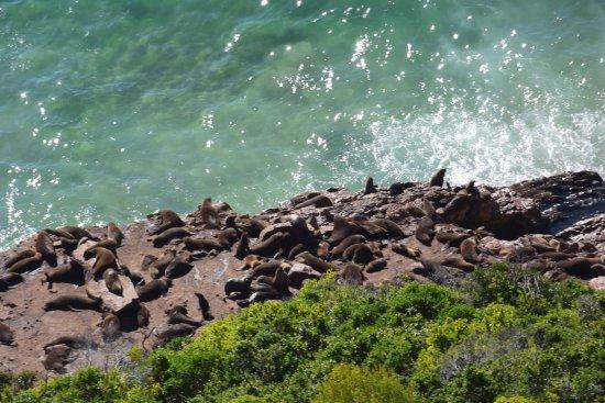 Plettenberg Bay, Zuid-Afrika: photo0.jpg
