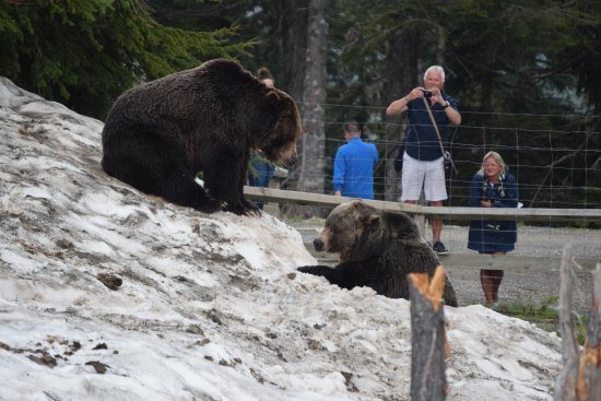 North Vancouver, Canadá: Those poor bears!