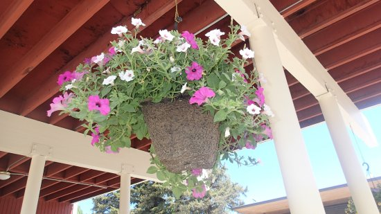 Town Center at Jackson: beautiful flower baskets throughout the town Jackson