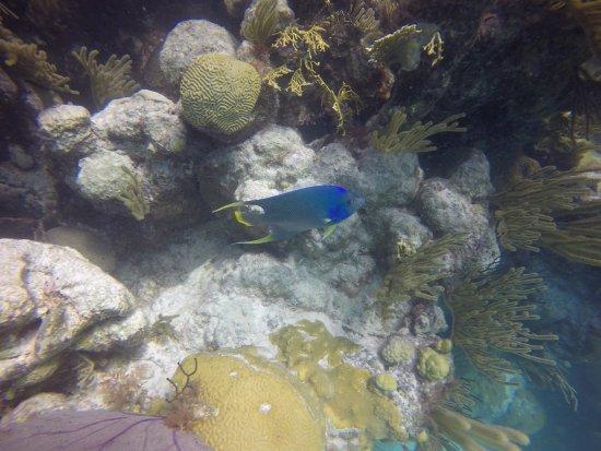 Гамильтон, Бермуды: Fish at the Blue Hole