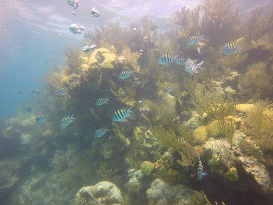 Гамильтон, Бермуды: Coral reefs at the Blue Hole