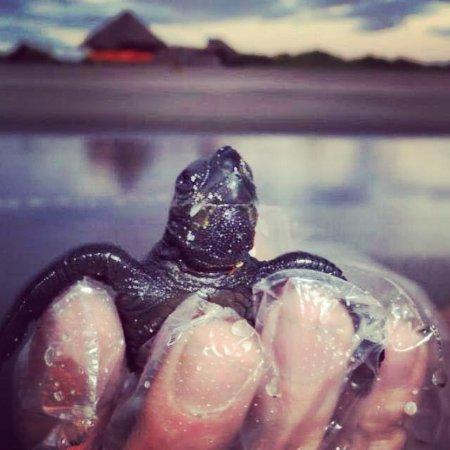 Poneloya, Nicaragua: Releasing baby sea turtles