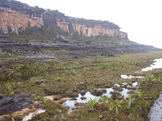 Mount Roraima: No caminho próximo ao vale dos cristais