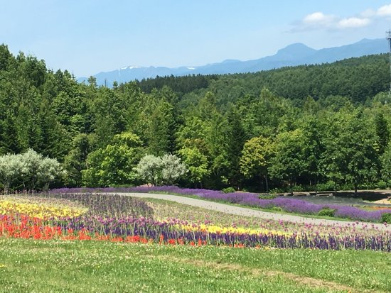 Takino Suzuran Hillside National Park: photo8.jpg