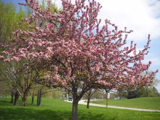 Sping is here! - Picture of The Gardens at SIUE ... on