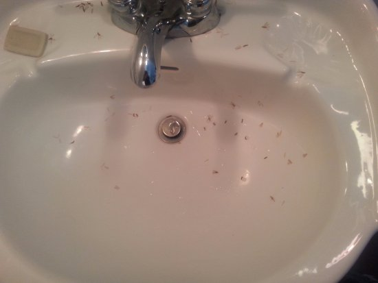 Simonton Court Historic Inn and Cottages : Termites in the sink when I woke up in the morning.