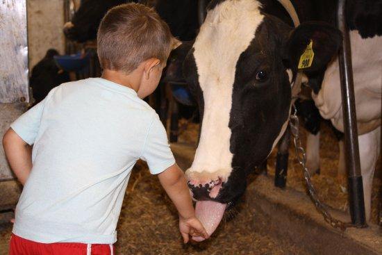 Cambridge, WI: Cow on the farm with my nephew.