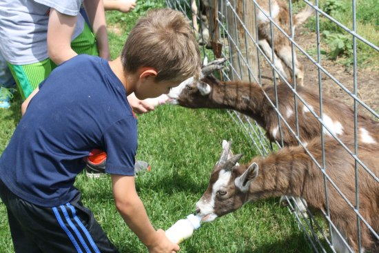 Cambridge, WI: Nephew bottle feeding goats.