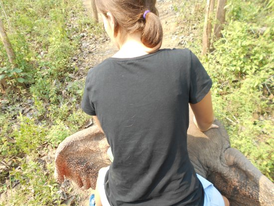 Elephant Adventures by Green Discovery Laos: Riding an elephant